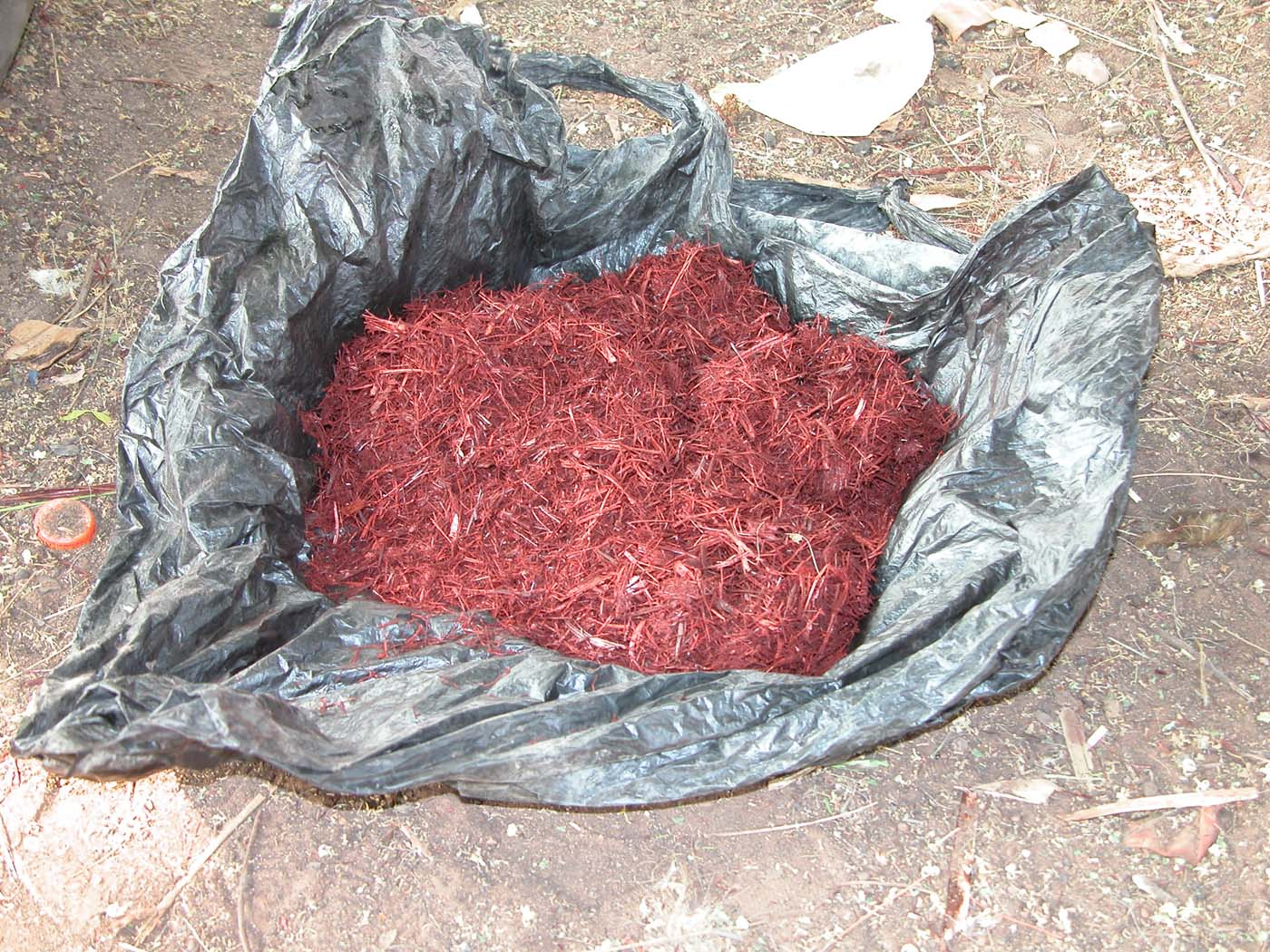 Bright red millet is used as a dye