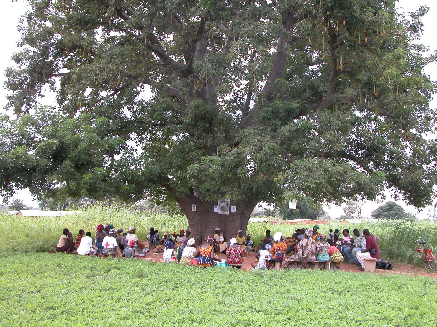 Weaving under the shade of a Baobab tree