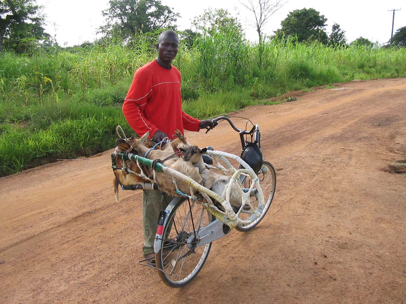 A bike adapted to carry goats